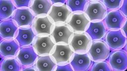 round cells arrange death by virus blue CG動画素材