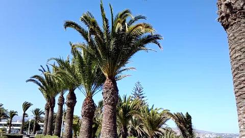 Palms with blue sky Footage