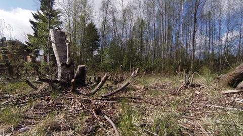 Felled timber, stumps Live Action