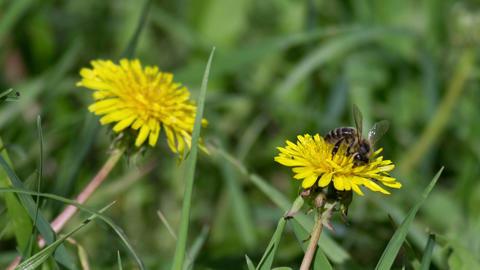 Bee Footage