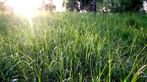 Grass At Sunset stock footage