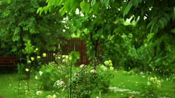 Summer Rain In The Flower Garden With Wind And Sound stock footage