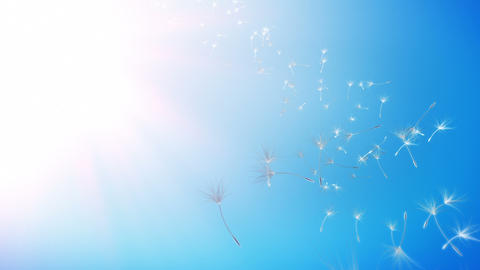 Dandelions Sky Background (Loop) Animation