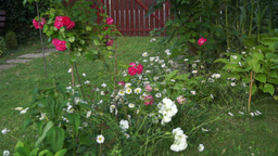 Garden With Flowers Footage