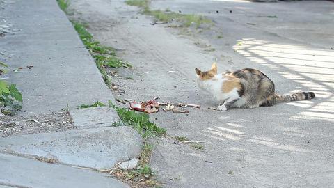Stray Cat Eats Footage