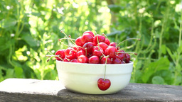 Cherries In A White Bowl. A Woman's Hand Take One Cherry. Environmental Sound Footage
