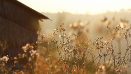 Vintage Old Hut With Grass Field On The Mountain In The Morning, Pan Camera stock footage