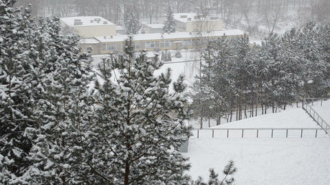 snowflakes dance above the snow covered pine tops and nursery Footage