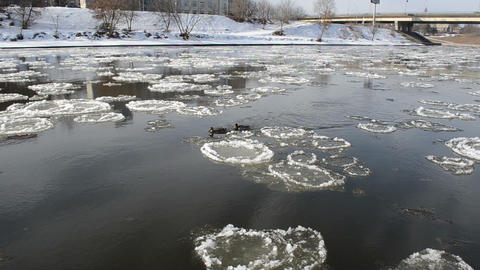 two ducks swim to each other against stream pieces of frozen ice Footage