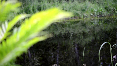 fern leaves move wind pond lake water fragment focus change blur Footage