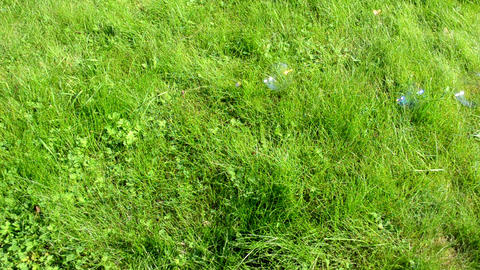 soap bubbles flying on background of green meadow grass Footage
