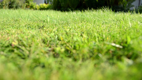 meadow grass closeup lawn mower worker gardener pass shadow Footage