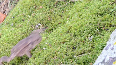 toad bufonidae amphibia animal crawl swarm moss Footage