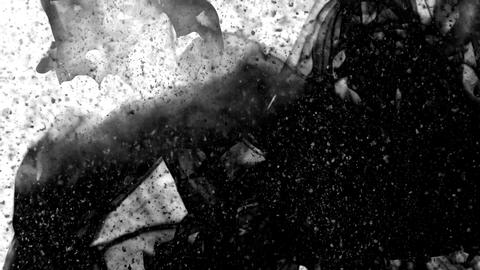 Black ink falling and creating volutes and dust particles moving on white Footage