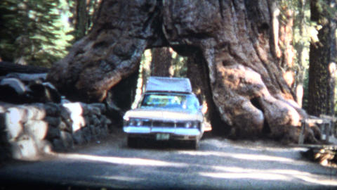 (8mm Vintage) 1966 Car Driving Through Giant Sequoia Tree California Footage