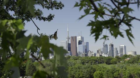 Toronto skyline peeking through the branches. 4K UHD Footage