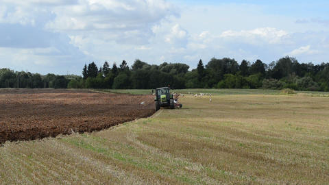 tractor work plow agriculture field summer many storks look food Live Action