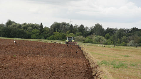 agricultural tractor plow field bird stork Footage
