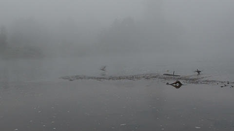 frightened ducks fly away misty fogy river flow Footage