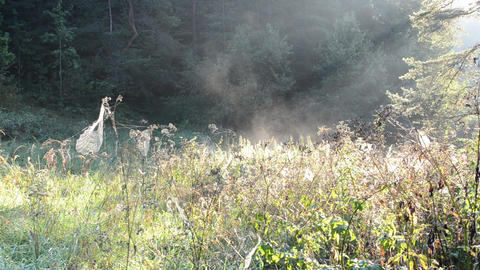 spiderweb spider web meadow grass fog vapour evaporate Footage