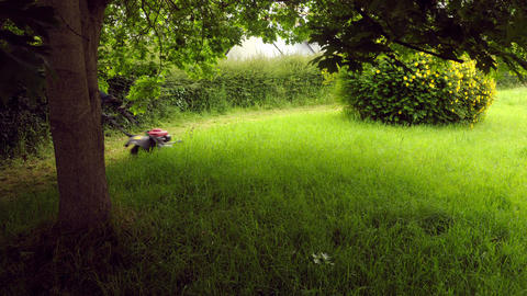 Lawn Mowing In Timelapse - 4k - Nice Yard With A Oak Being Cleaned Up stock footage
