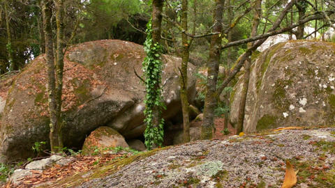 Wild Beech Forest and Huge Boulders Footage