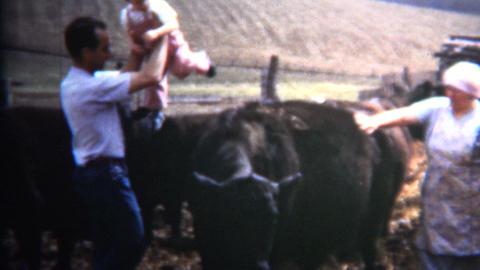 (8mm Vintage) 1952 Dad Puts Baby on Iowa Cattle as Joke Footage