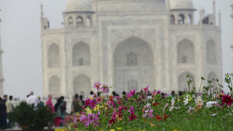 Flowers in lawn on the background of out of focus Taj mahal at Agra A UNESCO Wor Footage