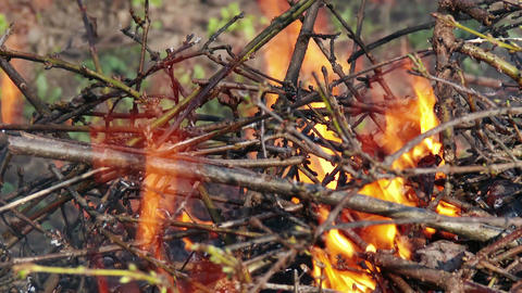4K Burning Leaves and Garden Waste in Late Autumn 6 closeup Stock Video Footage