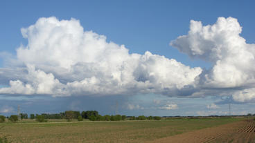 Cumulus Clouds Above A Corn Field (timelapse) stock footage