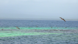 San Blas Islands Panama Central America 5 Footage