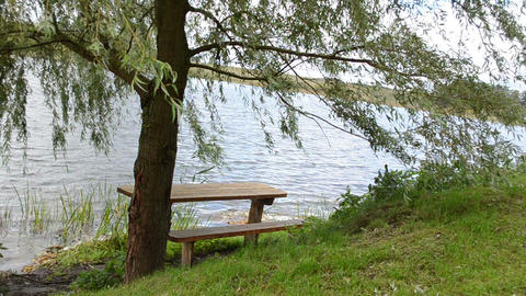 lonely wood bench willow tree branch move wind ripple lake water Footage