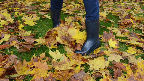 woman rubber boots play colorful autumn maple tree leaves meadow Footage