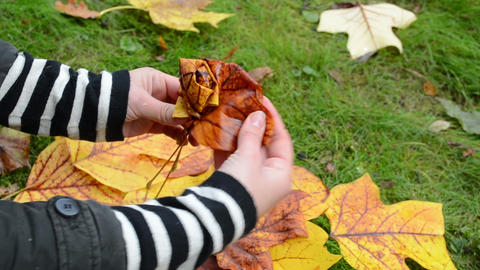 quick woman hands make decor flower autumn tree leaves Footage