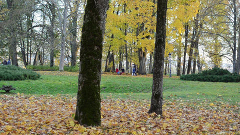 people relax rest colorful autumn park. couple sit bench walk Footage