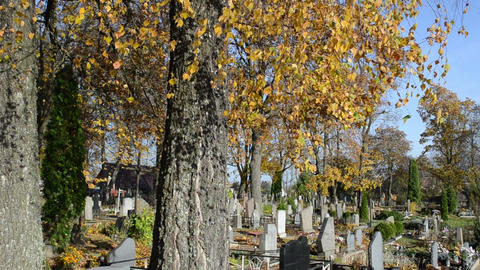 autumn birch tree branch move wind old cemetery grave monument Footage