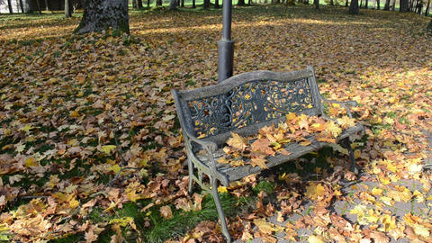 closeup decorative park bench autumn maple tree leaves move wind Footage