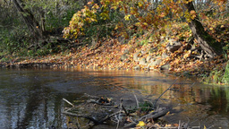 park bay water brook flow stones shore cover color autumn leaf Footage