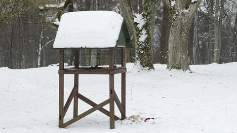 big wooden bird feeder park small birds looking food winter Footage