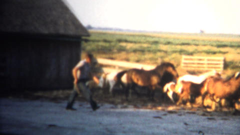 (8mm Vintage) 1962 Rancher Singling Out Horse In Pen. Iowa, USA Footage