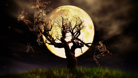 Lonely Tree 02 under Full Moon Stock Video Footage