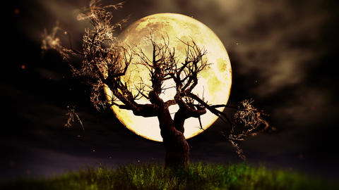 Lonely Tree 02 under Full Moon Animation