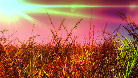 Meadow 02 Stock Video Footage