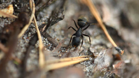 Ant Stock Video Footage