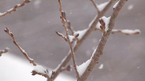 The Snowfall on the tree in Mt.Hakkoda,Aomori,Japa Stock Video Footage
