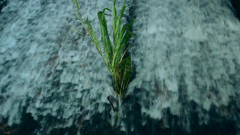 Rushing Water Grass Stock Video Footage