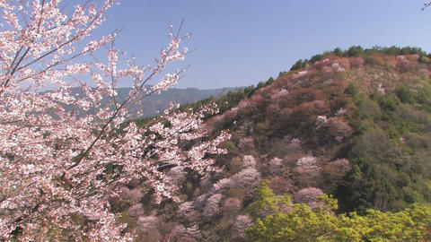 Spring Landscape in Mt.Yoshino,Nara Japan_1 Stock Video Footage
