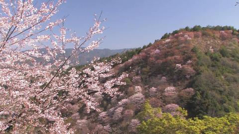Spring Landscape in Mt.Yoshino,Nara Japan_1 Stock Video Footage