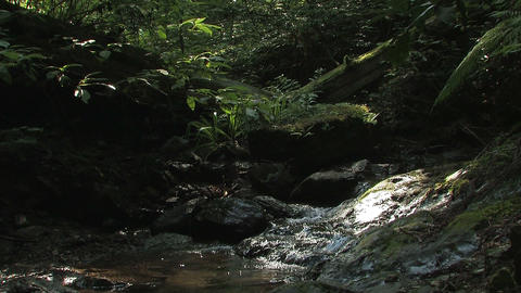 Summer Landscape of Mt.Takao\'s forest,in Tokyo,Japan Stock Video Footage