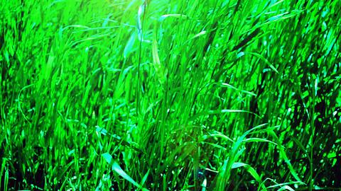 High Grass stock footage
